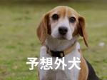 Fig_cm_yosogaiken_2