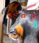 20080516_0221