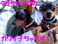 20081124_0111